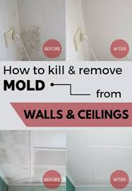 How To Prevent Black Mold In Bathroom Best 25 Remove Mold Stains Ideas On Pinterest Mildew Remover