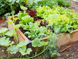 Small Vegetable Garden Ideas Pictures Small Vegetable Garden Ideas Tips Garden Design