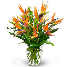 birds of paradise flower flower delivery in india bird of paradise flowers to india