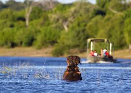 visit the caprivi strip on a trip to namibia audley travel