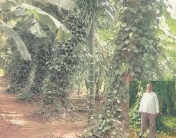 tnau agritech portal success stories