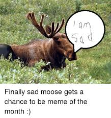 Moose Meme - wol finally sad moose gets a chance to be meme of the month