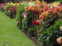 flower gardening gardening steps