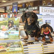 Barnes And Noble New Orleans 600 Best Crusoe