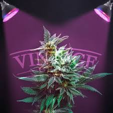 best led grow lights for marijuana amazon com vintage grow high yield full spectrum hydroponics led