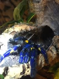 Overdone P Metallica Arachnoboards