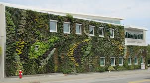indoor vine nice white residence decorated by indoor green wall made from vine
