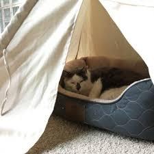Petco Cat Beds Petco 68 Photos U0026 73 Reviews Pet Stores 440 N Orleans St