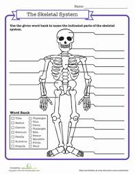 skeletal system quiz hip bones quizes and worksheets
