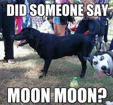 Moon Moon Memes - guy s werewolf name is moon moon internet weighs in 20 photos