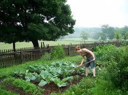 self sustaining garden self sustaining auntie dogma s garden spot