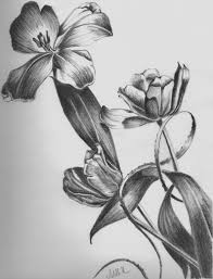 shading drawings flower pot how to draw a flower vase pencil