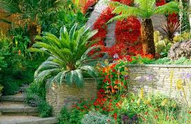 a sparkling tropical garden with architectural plants