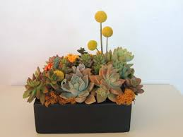 succulent arrangements succulent arrangement in ceramic container