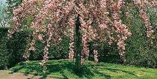 albero giardino alberi da giardino garden design come nuova vita al gi