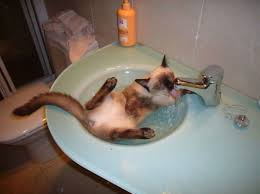 Cat In Bathtub 25 Crazy Cats That Love Water