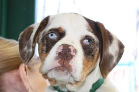 adopt your new best friend forever northeast animal shelter