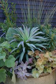 Outdoor Potted Plants Full Sun by Container Gardens Erica Glasener