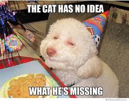 Birthday Dog Meme - funny hot dog birthday memes funny pics story