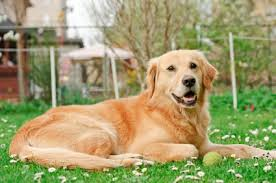 Garden Ideas For Dogs Friendly Garden Ideas For Dogs That Dig