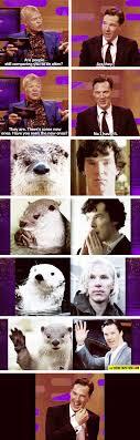 Cumberbatch Otter Meme - benedict cumberbatch otter resemblance