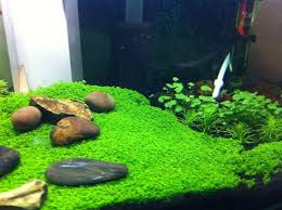 Fluval Edge Aquascape The Planted Tank Forum View Single Post Fluval Edge 6 Gallon