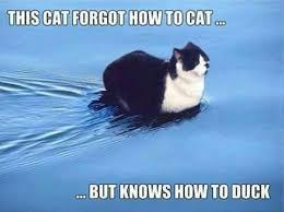 Silly Cat Memes - 10 hilarious cat memes my wonderful planet