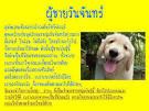 Bloggang.com : Nonglakgadear - แฟนคุณเปรียบเหมือนสุนัขพันธุ์อะไร ...