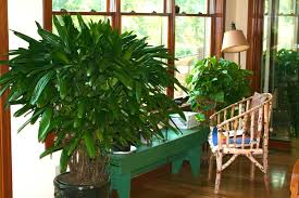 live indoor plants houseplants make you healthier costa farms