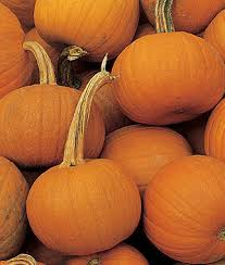 small pumpkins small sugar pumpkin seeds and plants vegetable gardening at