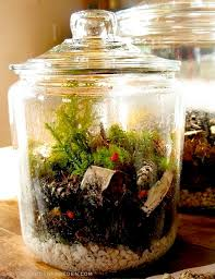 terrariums with native plantings the gardener u0027s eden