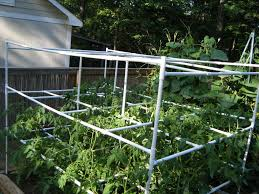 tomato cage with pvc 10 steps