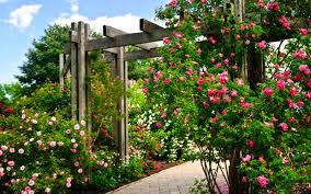 create an eye catching vertical garden in your yard