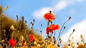 image arri鑽e plan bureau les plus beau fond ecran fleurs amazing picture collection
