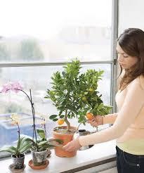 plants indoors best plants to grow indoors in the winter healthy home mother
