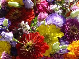 farm fresh flowers billabong fresh flower farm cut flowers