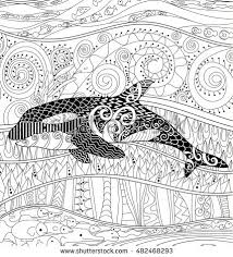 coloring page killer whale killer whale high details adult antistress stock vector 2018