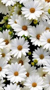 10 wonderful and cheap diy idea for your garden 7 flowers