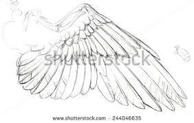 detailed sketch birds dove wing part stock illustration 244046635