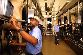 Factory Laborer Job Description Dairy Products Manufacturing Workers Job Title Overview Vault Com