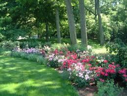Big Backyard Landscaping Ideas 54 Best Landscaping Ideas Images On Pinterest Backyard Plants