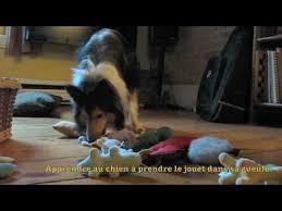 comment cuisiner du chien comment apprendre à chien à saute dans nos bras
