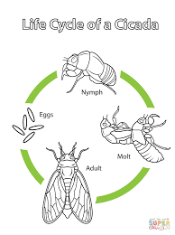 life cycle of a cicada coloring page free printable coloring pages