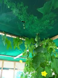 backyard aquaponics u2022 view topic aquaponics system on rooftop in