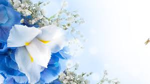 white and blue flowers bouquet of blue irises white flowers and butterfly stock footage