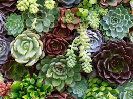 Succulent Plant One Thing I Wish Someone Told Me Before I Started A Succulent
