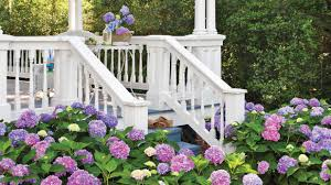hydrangeas flowers how to change your hydrangea color blue pink white hydrangeas