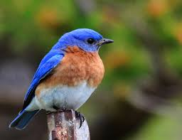 32 best my birds images on pinterest backyard birds beautiful