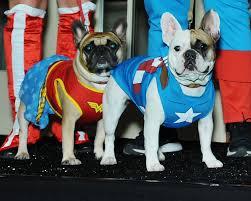 eye contacts halloween spirit dogs get in costume halloween spirit to benefit welfare league