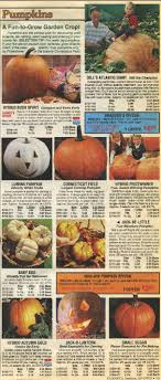 the changing nature of pumpkins 1946 to the present